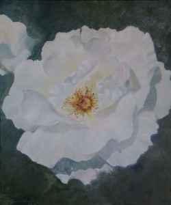 Open White Rose