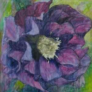 Purple Helleborus
