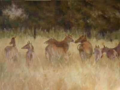 Indian Antelopes