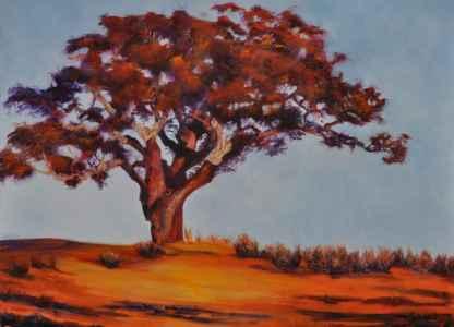 The Cork Oak Tree