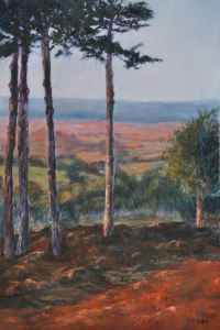 View Through Pine Trees
