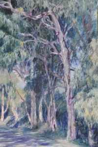 Eucalyptus Walk